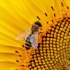 De bijenhouderij
