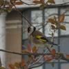 Vogels rondom mijn huis