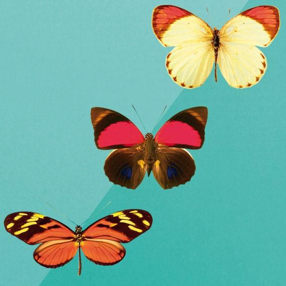 Vlinders!