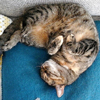 Kattengedrag, leer uw kat te begrijpen!