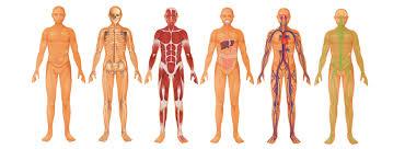 Gezondheid en beweging