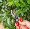 Snoeien voor een insectvriendelijke tuin