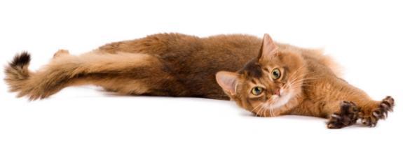 Kattengedrag & de 2 meest voorkomende gedragsproblemen