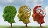 Lezing De wondere wereld van dementie