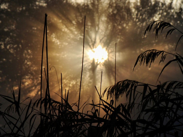 Geest, ziel en persoonlijkheid; de mystiek van het leven