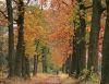 Lezing landschappen en vogels rondom Arnhem