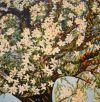 Tuinen in de schilderkunst