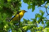 Vogelzang in de muziek