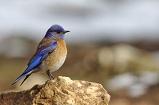Een decoratieve vogel van klei