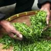 Maak kennis met de heerlijke aroma's van specialty thee