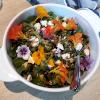 Koken met wilde planten
