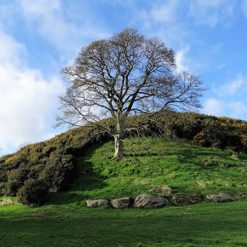 De archeologie van Ierland