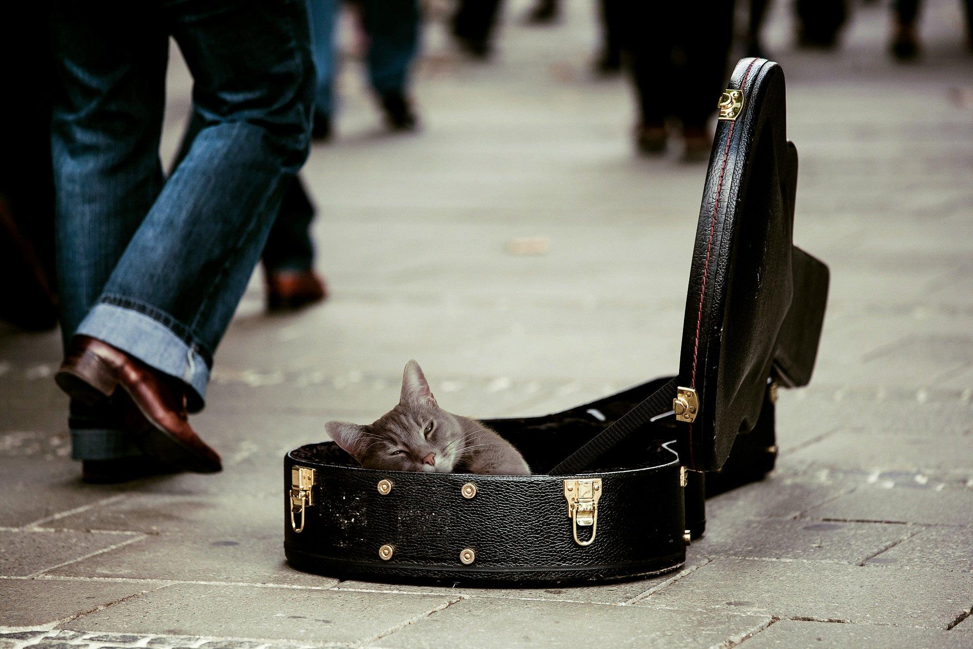 Dieren in de muziek